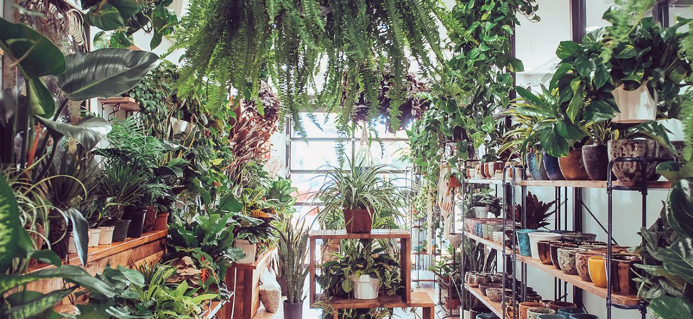 Eden-Garden-Home-Main-Portfolio-006