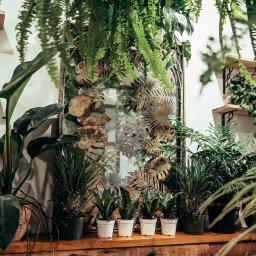Low Water Plants