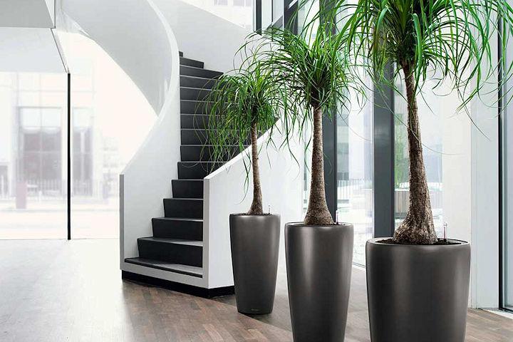 Eden Garden Home Plant Services